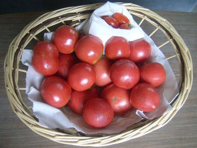 090727_tomato_400_60